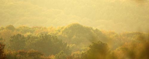 Point de Vue sur la forêt de Quénécan
